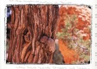 TREES - Bryce Canyon, Utah