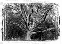 TREES - San Juan Islands, Washington